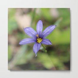 Blue Eyed Grass Flower Metal Print