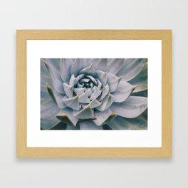 Pale Succulent Center Framed Art Print