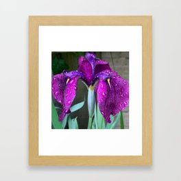 Sacred Trilogy: Water Irises Framed Art Print