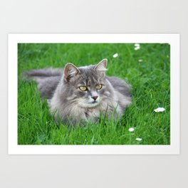 Persian cat in the grass Art Print