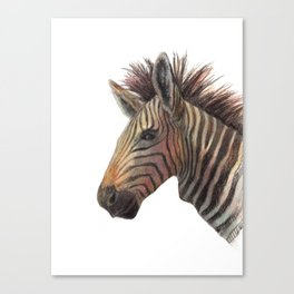 Zebra Drawing Canvas Print