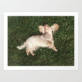 Fourclover leaf - Dog enjoying summer grass on her back Art Print