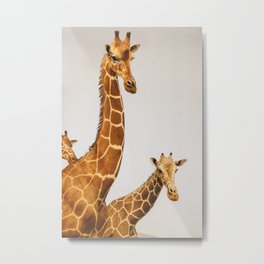 Giraffes, but Still Life Metal Print
