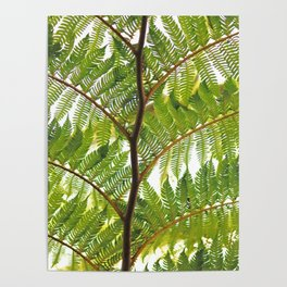 Green Palm Poster