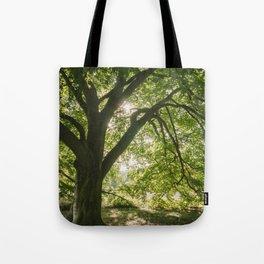 Sunlight through ancient Beech trees (Fagus sylvatica). Norfolk, UK. Tote Bag