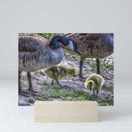 Taking Care of Goslings Mini Art Print
