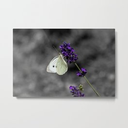 Cabbage butterfly on lavender, monochromatic bokeh background Metal Print