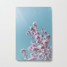 SPRING MAGNOLIA FLOWER TREE, pink on turquoise Metal Print