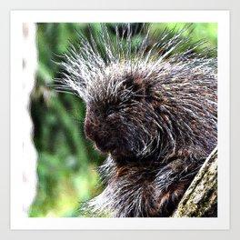 toony New World porcupines ( Erethizontidae) Art Print