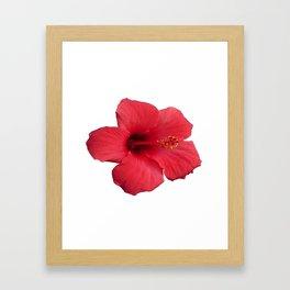 Stunning Red Hibiscus Flower Framed Art Print