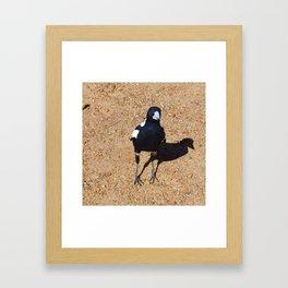 Black and White Magpie Bird Framed Art Print