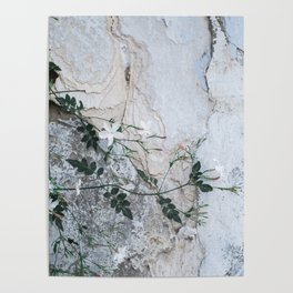 Growth - Nature Photography Poster