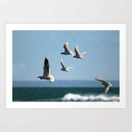 Seagulls flying over the sea Art Print