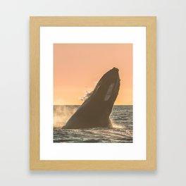 Sunset Breach Framed Art Print