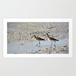 Willets in the Winter Art Print