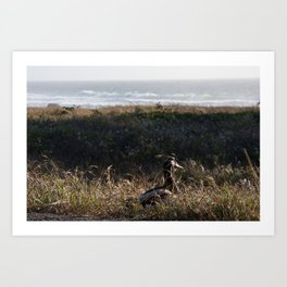 The duck on its way to the ocean Art Print