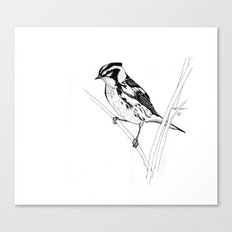 Blackburnian Warbler Study Canvas Print