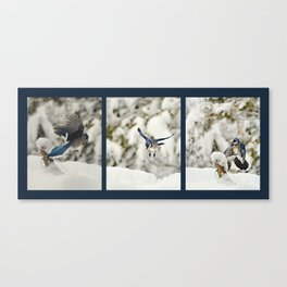 Blue Jay action Canvas Print