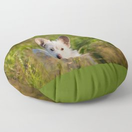 Single white stray tyke dog at the meadow Floor Pillow