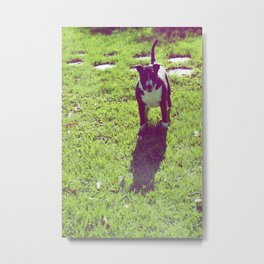 Lucy Metal Print
