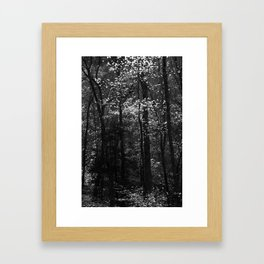 Great Smoky Mountains Forest Framed Art Print