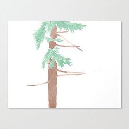 Sequoia sempervirens Study Canvas Print