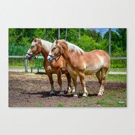 """Equine Duo"" Canvas Print"