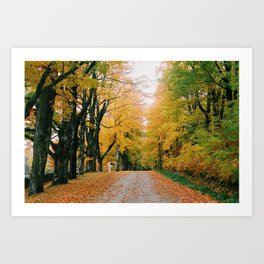Fall Leaves on a Country Road - 35mm film Art Print