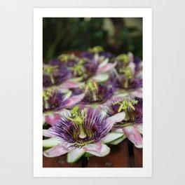 Passionflowers Art Print