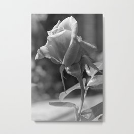 Rose Mono Metal Print