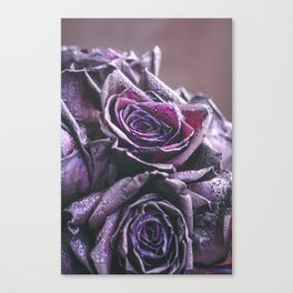 Macro photography of purple roses with raindrops. Fantasy and magic concept. Selective focus. Canvas Print