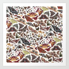 Moths of North America Pattern Art Print
