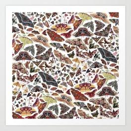 Moths of North America Pattern Art Print