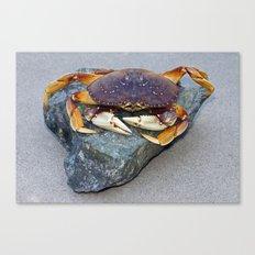 Crab On A Rock Canvas Print