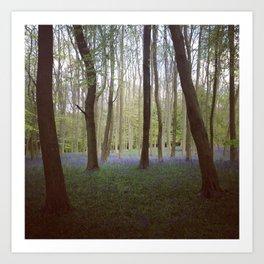 Bluebell Woods - Aldbury Common Art Print