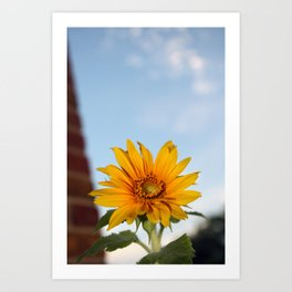 My Sunflower, Julia #7 Art Print
