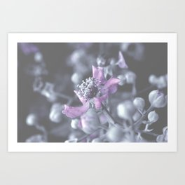Wildflower Close-up Art Print