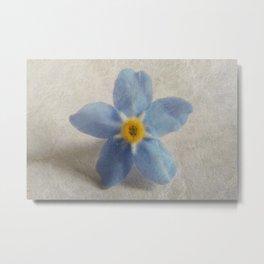 Myosotis 'Forget-me-not'- Single Flower Metal Print