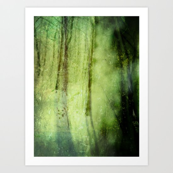 Peering through the shadows ~ Winter forest Art Print