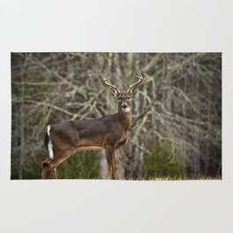 White Tailed Deer Eight Point Buck Rug