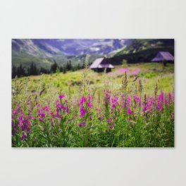 Fireweed In The Mountains Canvas Print