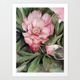 Peony V Art Print