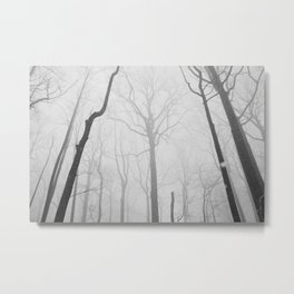 Snowy Morning in the Woods Metal Print