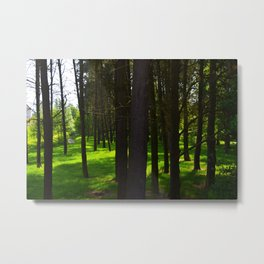 Go down to the woods  Metal Print