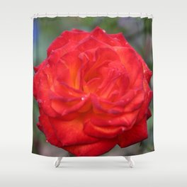 Dew Drops on a Rose Shower Curtain