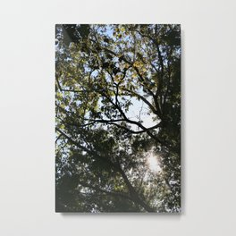 Reaching for the Light Metal Print