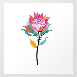 Protea Illustration; Botanical; Australian Native Art Print