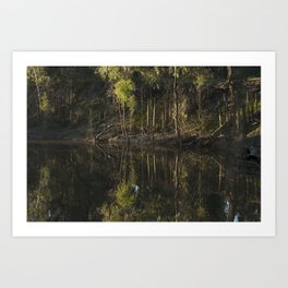 Creek Art Print