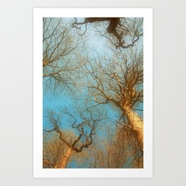 High up in the early  fresh Spring Air Art Print