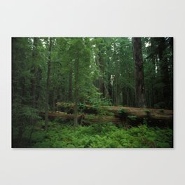 Fallen Tree in The Dense Forest Canvas Print